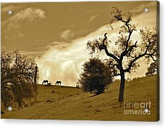 Sepia Of Two Horses Acrylic Print by Amy Fearn