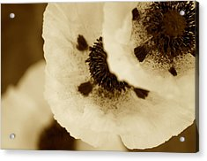 Sepia Poppies Acrylic Print