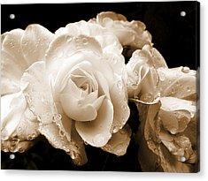 Sepia Roses With Rain Drops Acrylic Print