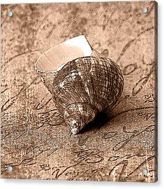 Sepia Seashell Acrylic Print by Karen Stephenson