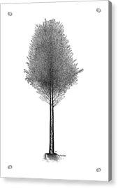 September '12 Acrylic Print