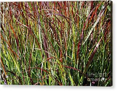 September Grasses By Jrr Acrylic Print by First Star Art