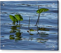 September Reflections Acrylic Print