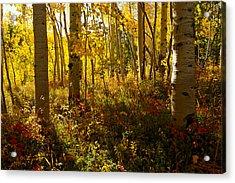September Scene Acrylic Print by Jeremy Rhoades