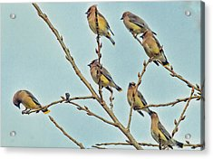 Septet Acrylic Print by Constantine Gregory