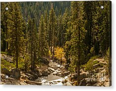 Sequoia National Park  1-7832 Acrylic Print