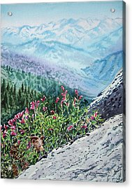 Sequoia National Park Acrylic Print