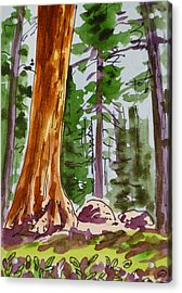 Sequoia Park - California Sketchbook Project  Acrylic Print by Irina Sztukowski
