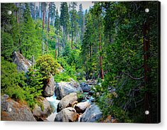 Sequoia Stream Acrylic Print by Heidi Smith