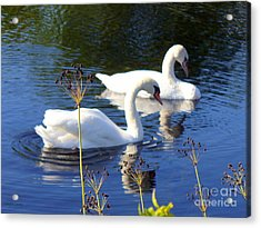 Acrylic Print featuring the photograph Serenade Of  Love by Lingfai Leung