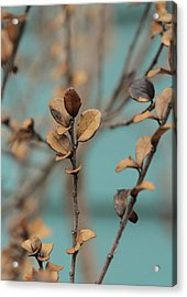 Serendipity .. Ascent Acrylic Print by Connie Handscomb