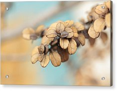 Serendipity Acrylic Print by Connie Handscomb