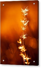 Acrylic Print featuring the photograph Serene by Darryl Dalton