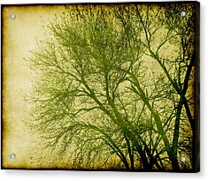 Serene Green 1 Acrylic Print by Wendy J St Christopher