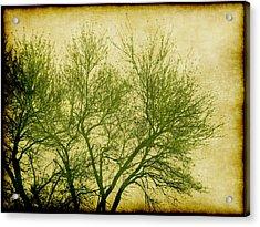 Serene Green 2 Acrylic Print by Wendy J St Christopher