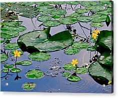 Serene To The Extreme Acrylic Print by Frozen in Time Fine Art Photography