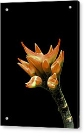 Serene - Unruffled Acrylic Print