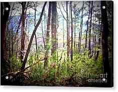Serene Woodlands Acrylic Print