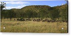 Acrylic Print featuring the photograph Serengeti by Joseph G Holland