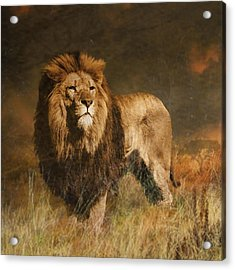 Acrylic Print featuring the photograph Serengeti Sunset by Brian Tarr