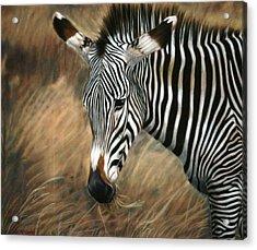 Serengeti Zebra Acrylic Print by Carol McCarty