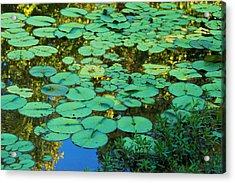 Acrylic Print featuring the photograph Serenity Found - Green Lotus Leaves In Blue Water by Jane Eleanor Nicholas