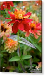 Serenity In Red Acrylic Print
