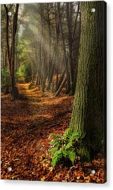 Serenity Of The Forest Acrylic Print by Bill Wakeley