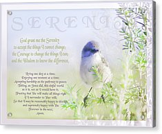 Serenity Prayer Acrylic Print by Holly Kempe