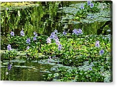 Serenity Unfolds Acrylic Print by Kicking Bear  Productions