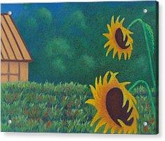 Sergi's Sunflowers Acrylic Print