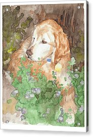 Setter Dog In Flowers Watercolor Portrait Acrylic Print by Mike Theuer