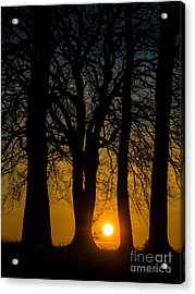 Setting Between The Trees - Wittenham Clumps Acrylic Print by OUAP Photography