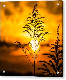 Setting Sun Acrylic Print by Parker Cunningham