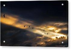 Seven Bird Vision Acrylic Print by Bob Orsillo