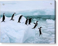 Seven Chinstrap Penuins Queueing Acrylic Print by Rosemary Calvert