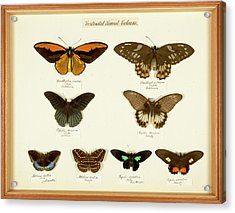 Sexual Dimorphism In Butterflies Acrylic Print by Natural History Museum, London