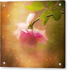 Shabby Chic Rose Print Acrylic Print by Theresa Tahara
