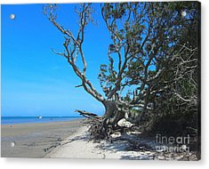Shackleford Banks Tree 2 Acrylic Print