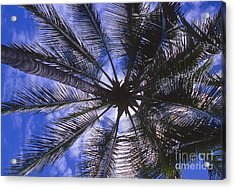 Shade Acrylic Print by William Norton