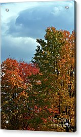 Acrylic Print featuring the photograph Shaded by Judy Wolinsky