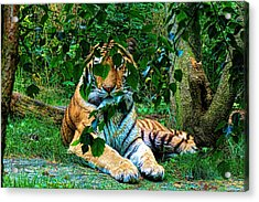 Shaded Stripes Acrylic Print by Glenn Feron