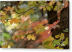 Shaded Wood Acrylic Print