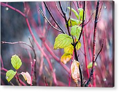 Shades Of Autumn - Reds And Greens Acrylic Print by Alexander Senin