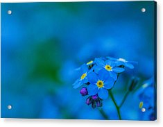 Shades Of Blue Acrylic Print