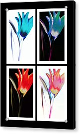 Shades Of Colour  Acrylic Print
