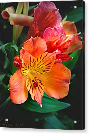 Shades Of Orange Acrylic Print