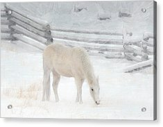 Shades Of Pale Acrylic Print by Ed Hall