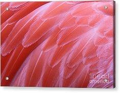 Shades Of Pink #3 Acrylic Print