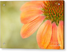 Shades Of Summer Acrylic Print by Beve Brown-Clark Photography